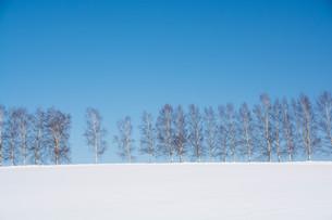 青空と冬のシラカバ並木 美瑛町の写真素材 [FYI01222926]