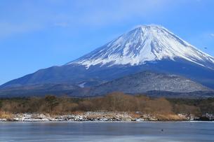 精進湖の富士山の写真素材 [FYI01222943]