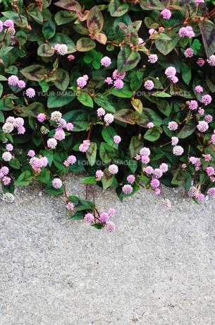 小花の群生の写真素材 [FYI01222999]