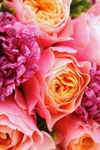 薔薇とラナンキュラスの写真素材 [FYI01223033]