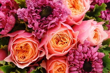 薔薇とラナンキュラスの写真素材 [FYI01223040]