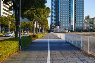横浜のみなとみらい大通りの歩道の写真素材 [FYI01223069]