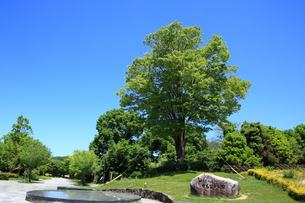 有馬富士公園の写真素材 [FYI01223119]