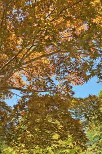 高野山の紅葉の写真素材 [FYI01223154]