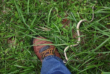 足を蛇に咬まれるイメージの写真素材 [FYI01223179]