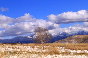 霧ヶ峰の冬の写真素材 [FYI01223206]