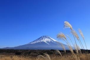 青空とすすきと富士山の写真素材 [FYI01223208]
