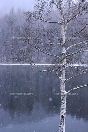 冬の御射鹿池の写真素材 [FYI01223212]