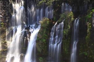 白糸の滝/静岡県の写真素材 [FYI01223247]
