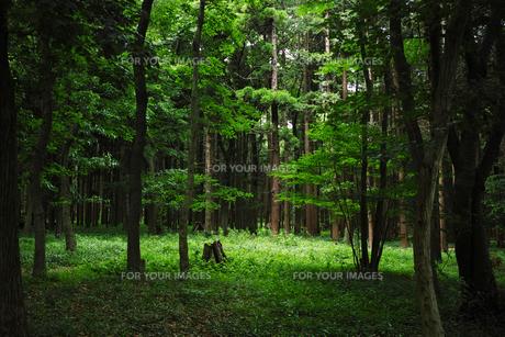 森の風景の写真素材 [FYI01223458]