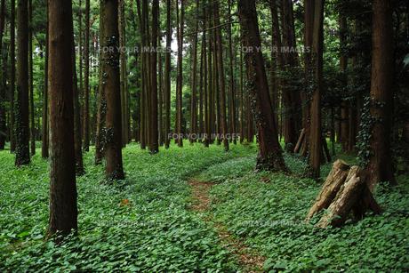森の風景の写真素材 [FYI01223459]