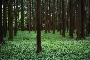 森の風景の写真素材 [FYI01223462]