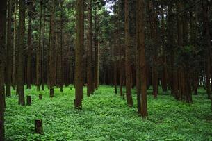 森の風景の写真素材 [FYI01223463]