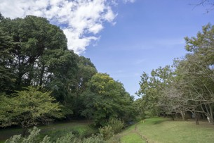 秋の木々と空の写真素材 [FYI01223672]