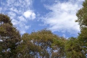 秋の木々の写真素材 [FYI01223676]