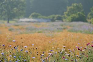 田舎の景色の写真素材 [FYI01223705]
