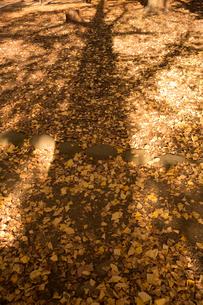 落ち葉と影の写真素材 [FYI01223714]