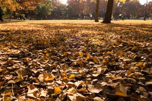 落ち葉の写真素材 [FYI01223721]