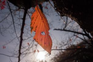 初冬の写真素材 [FYI01223725]
