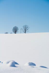 雪原の冬木立と青空 美瑛町の写真素材 [FYI01223741]