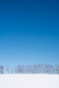 雪の丘とシラカバ並木 美瑛町の写真素材 [FYI01223743]