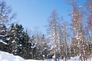 冬の林の写真素材 [FYI01223744]