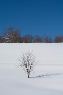 雪原と冬木立の写真素材 [FYI01223748]