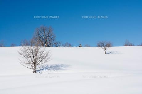 雪原と冬木立の写真素材 [FYI01223750]