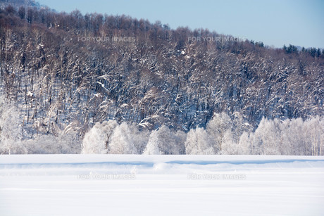 霧氷が輝く北国の寒い朝の写真素材 [FYI01223763]