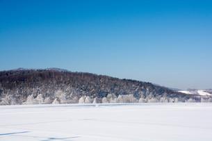 霧氷が輝く北国の寒い朝の写真素材 [FYI01223765]