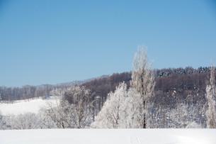 霧氷が輝く北国の寒い朝の写真素材 [FYI01223767]