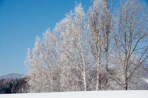 霧氷が輝く北国の寒い朝の写真素材 [FYI01223770]