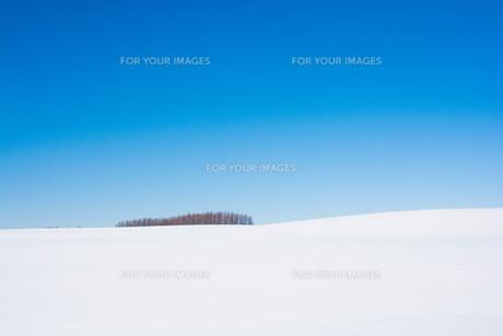 冬の青空とカラマツ林の写真素材 [FYI01223776]