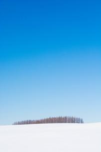 冬の青空とカラマツ林の写真素材 [FYI01223777]