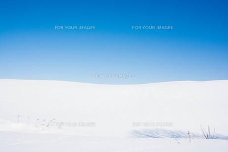 雪原と青空と野生動物の足跡の写真素材 [FYI01223780]