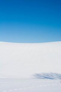 雪原と青空と野生動物の足跡の写真素材 [FYI01223781]