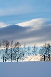 雪の丘とシラカバ並木 美瑛町の写真素材 [FYI01223787]