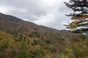 秋の木々と空の写真素材 [FYI01223874]