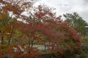 秋の木々の写真素材 [FYI01223876]