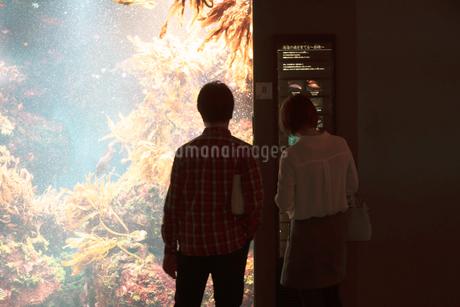 水族館に二人での写真素材 [FYI01224002]