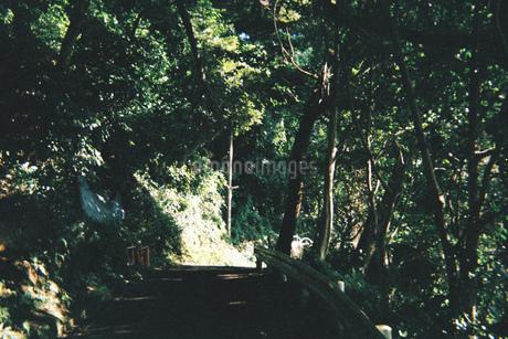 森の写真素材 [FYI01224038]