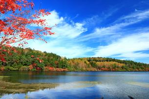 白駒池の紅葉の写真素材 [FYI01224049]