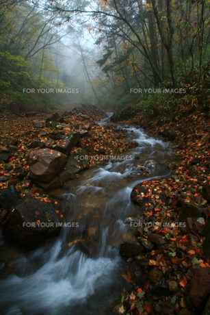 秋の霧雨降る森の小川の写真素材 [FYI01224069]