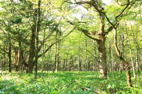 瑞々しい緑の森の写真素材 [FYI01224089]