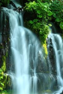 光と新緑の滝の写真素材 [FYI01224092]