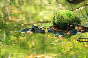 水面に苔の写真素材 [FYI01224093]