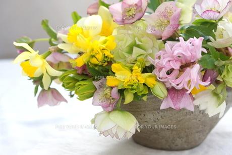 早春の花の写真素材 [FYI01224333]