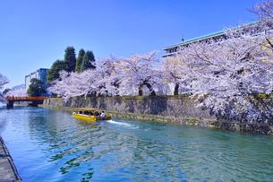 春の京都、満開の桜咲く琵琶湖疎水と遊覧船の写真素材 [FYI01224426]