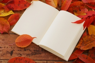 晩秋 落ち葉とノートの写真素材 [FYI01224617]