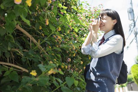 女子高生 花の写真素材 [FYI01224711]